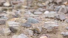 Ant Nest in the Desert Tilt Down Stock Footage