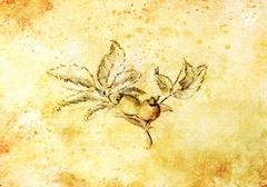 Pencil drawing on old paper, Rose. Latin name, rosa canina. Sepia color Stock Illustration
