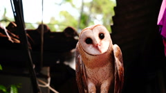 Owl with black eyes. Stock Footage