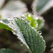 Dewdrops - stock photo