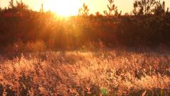 Field Glowing in the Sunset Stock Footage