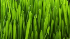 Growing green grass plant 4k Stock Footage