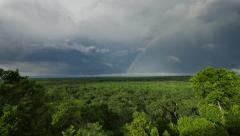 jungle with rainbow - stock footage