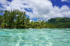 Tropical shore green vegetation French Polynesia - stock photo