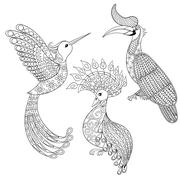 Coloring page with Bird Rhinoceros, Hummingbird and exotic bird Piirros