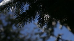 Sping warm sun shinings through the tree branches and falling drops melting snow Arkistovideo