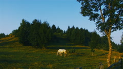 White horse on green pasture 2 Stock Footage
