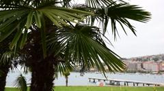 Palm tree on the coastline Stock Footage