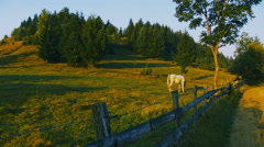 Transylvanian rural landscape with horse - stock footage