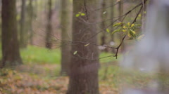 Eco forest wedding light bulb with flower Stock Footage