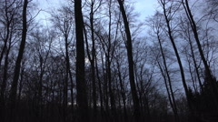4k Evening panning shot within deep forest landscape Stock Footage