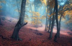 Beautiful magic forest in fog in autumn. Mysterious wood. Fairytale - stock photo