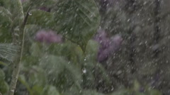 Water droplets hitting the leaves in a vegetable garden Stock Footage