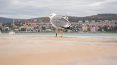 Seagull sit on the pier, seagull closeup Stock Footage