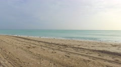 Seagulls on the beach Stock Footage
