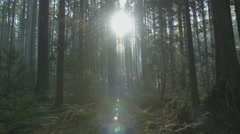 Pacific Northwest Forest Sunshine dolly shot Stock Footage