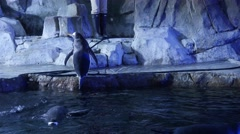 Gentoo penguins inside the cold aquarium - stock footage