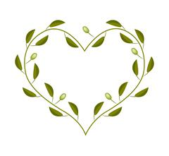 Olives Leaves and Fruits in A Heart Shape Frame - stock illustration