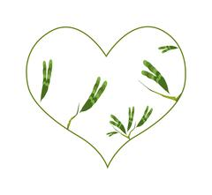 Evergreen Leaves in A Heart Shape Border - stock illustration