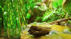 Rotting Log Lies in a Muddy, Tropical Stream, with Sound - stock footage