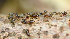 Colony of Termites, Swarming on a Deadfall Branch Stock Footage