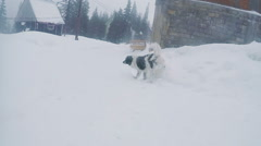 Stray dog in snows Stock Footage
