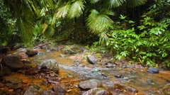 Natural Jungle Stream on a Rainy Day, with Sound Stock Footage
