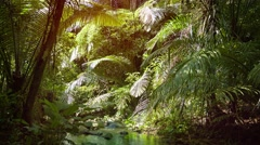 Peaceful, Tropical Mountain Streem in a Rainforest Wilderness Stock Footage