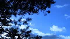 Clouds floating in the sky, tree branches swaying from a wind. Stock Footage
