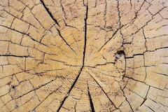 cut a large tree rings texture abstract background - stock photo