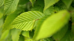 Leaves Closeup Moving Shot Stock Footage