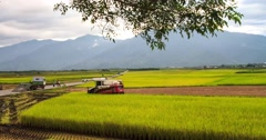 The time lapse of Rural scenery of paddy farm and country road in Chishang To Stock Footage