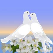 Two white doves and branch of blossoming apple tree - stock illustration