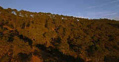 4K Aerial, Flying over a forest in Andalusia, Spain Stock Footage