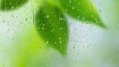 Stock Video Footage of blur leaves through transparent rainy window