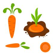 Carrot vector set in different styles - stock illustration