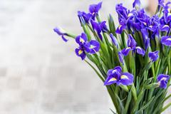 Bright irises Background Stock Photos