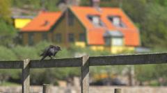 Western Jackdaw Bird Flies Away - Birds Flying Away Stock Footage