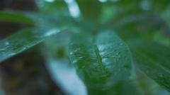 Raindrops on a leaf Stock Footage