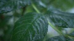 Raindrops falling on a leaf Stock Footage