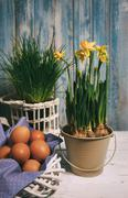 Spring still life with eggs and narcissus - stock photo