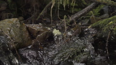Natural Fresh Spring Water With Moss In Slow Motion Stock Footage