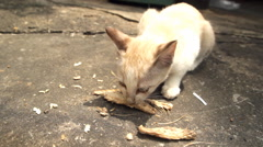 Feeding stray cat Stock Footage