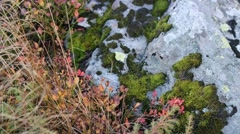 Spread clumps of moss on the ground and stone lighted close-up Stock Footage