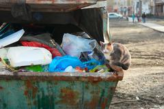 Feral cat sitting on trash dumpster full of garbage - stock photo