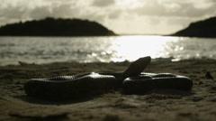 Antiguan racer snake on beach. - stock footage