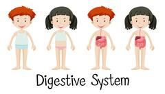 Boy and girl with digestive system Stock Illustration