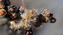 Caterpillar exuvia, Stock Footage