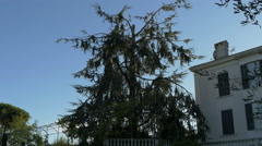 View of a fir tree in Vence, France Stock Footage