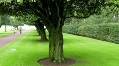 Bigf trees inside the Versaille castle - stock footage